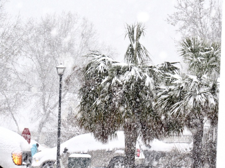 Snow-covered palms