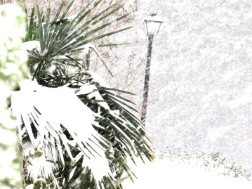 Snow-covered palm